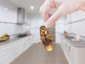 Уничтожение тараканов в Пензе